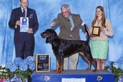 3-hound-04.26.20140001