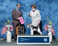 q-NOH-Terrier-5.1.2021