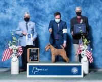 f-Terrier-5.1.2021
