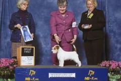 5-terrier-4-26-2015