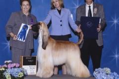 3-hound05022010