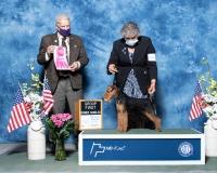 q-NOH-Terrier-5.2.2021