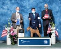 f-Terrier-5.2.2021